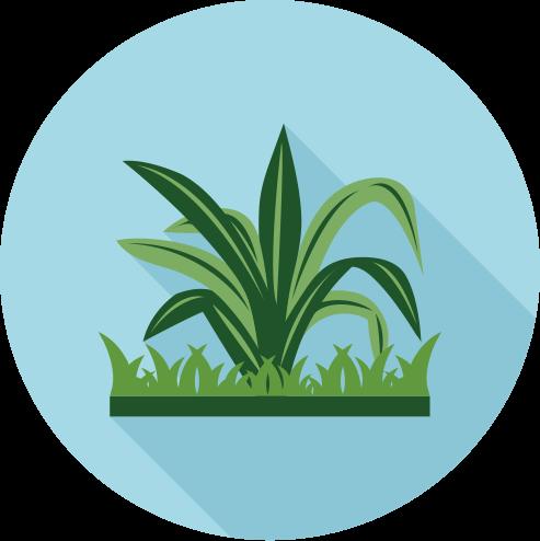 Crabgrass Control Service Image